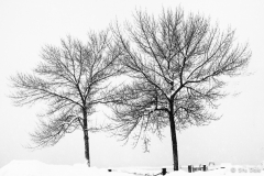 Trees_in_the_Park_MT0004