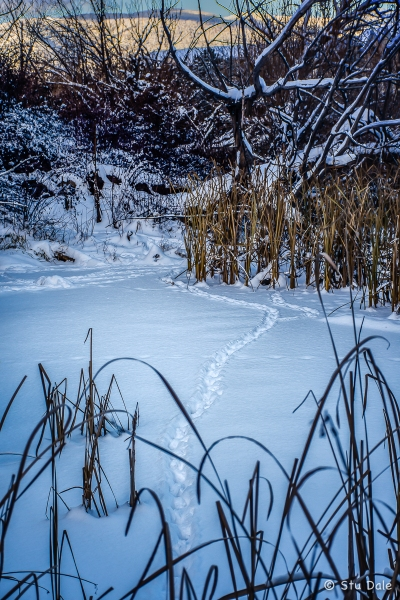 Tracks_in_the_Snow_-_N0007