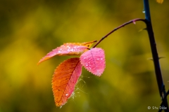 Fall_Colour_-_N0011