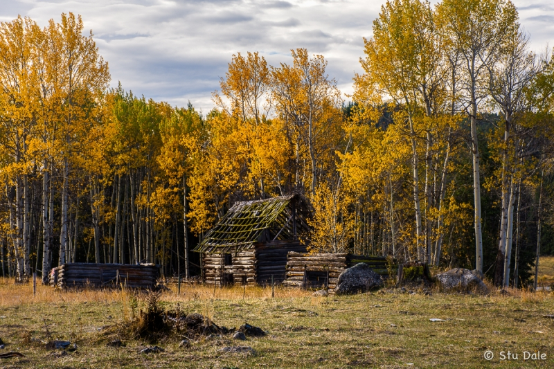 Homestead_in_the_Forest_LA0021