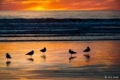 Sunset-Majesty - S0015
