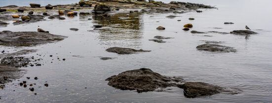 Exploring: Wandering along central Vancouver Island